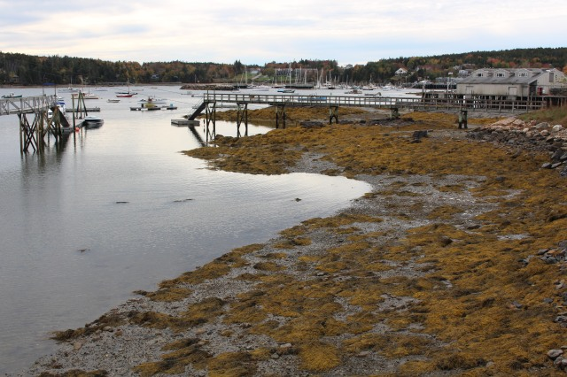 A golden shore at Southwest Harbor, Maine facing Beal's Lobster Pier.