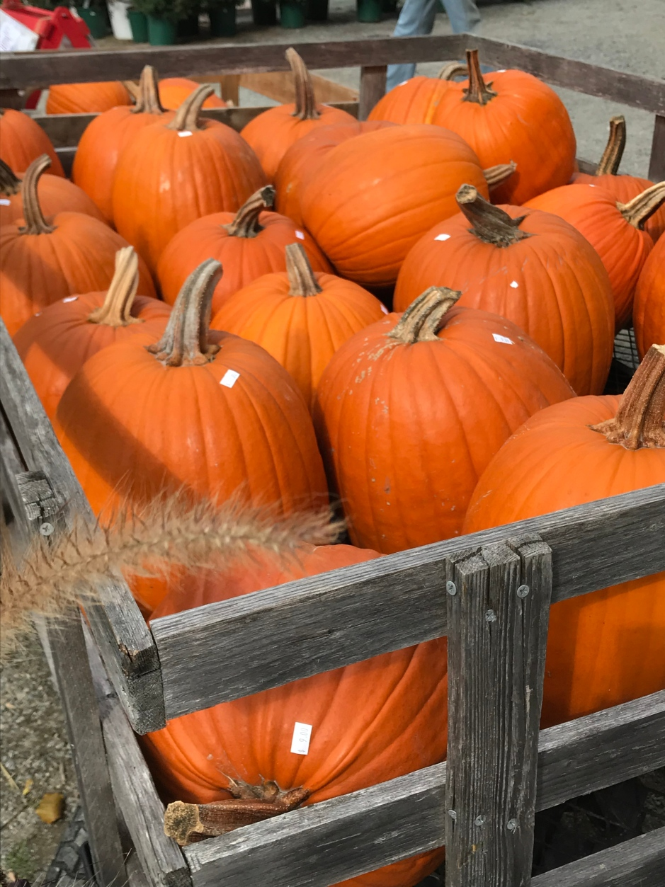 Could it even dare to be a fall festival without a cart full of punkins?