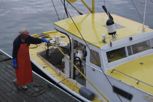 Lobsterman in Castine ready to head out for the morning catch.