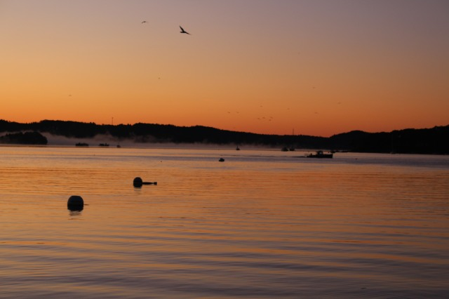 First glow of sunrise at Castine harbor with deep orange colors and a hint of fog.