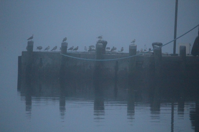 Birds await fog lifting at the dock in Castine, Maine.