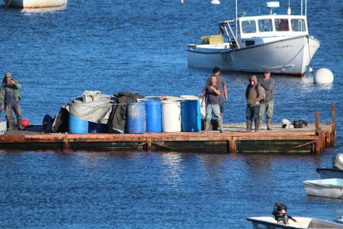 Maine lobstering: bringing in the catch!