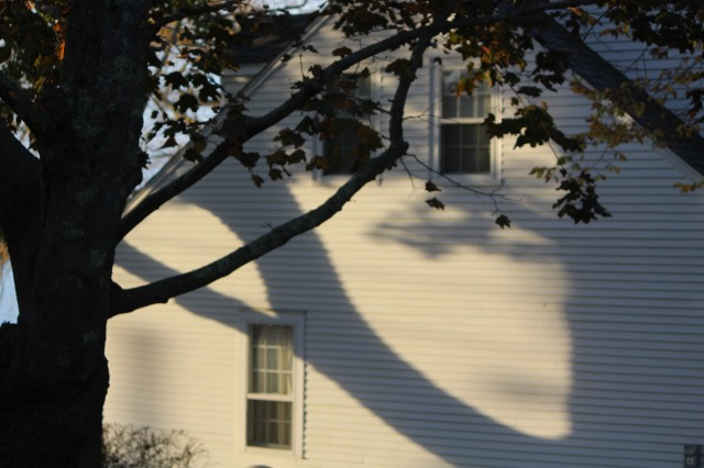 Sharp, crisp shadow of a tree branch transforms the side of this home during early morning hours.