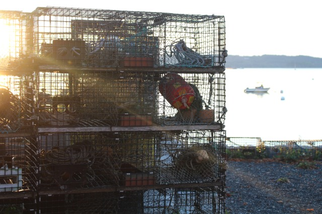 Sunlight filters through lobster traps at Acadia Dock, Castine, Maine