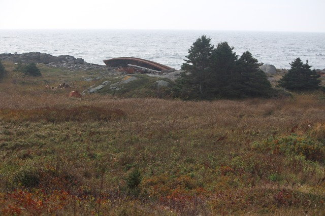 In the distance: remains of the D. T. Sheridan on Lobster Cove