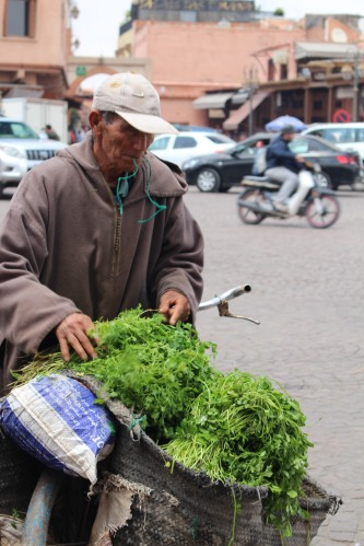 Herbs by bicycle: Marrakech medina