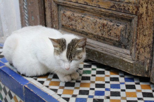 Asleep on the stoop: Bahia Palace, Marrakech