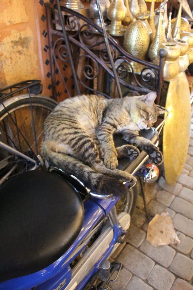 A motorcycle seat makes a fine cat bed in the Marrakech medina.