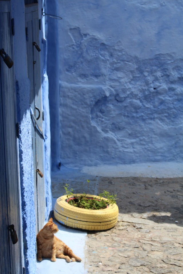 Cat on a doorstep: Chefchaouen, Morocco