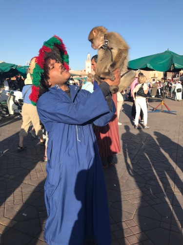 A monkey handler shows off for the camera in Jemaa el-Fnaa.