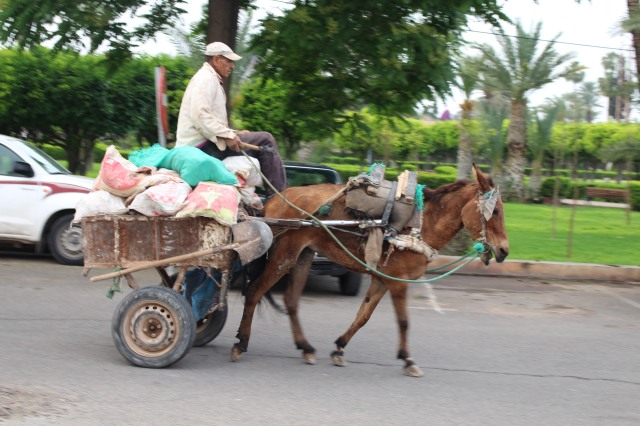 Donkeys pulling carts were the norm for those who needed help with deliveries.