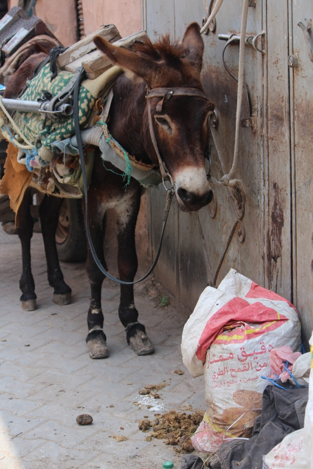 Waiting to deliver the goods, a donkey stands tethered in a Marrakech marketplace.