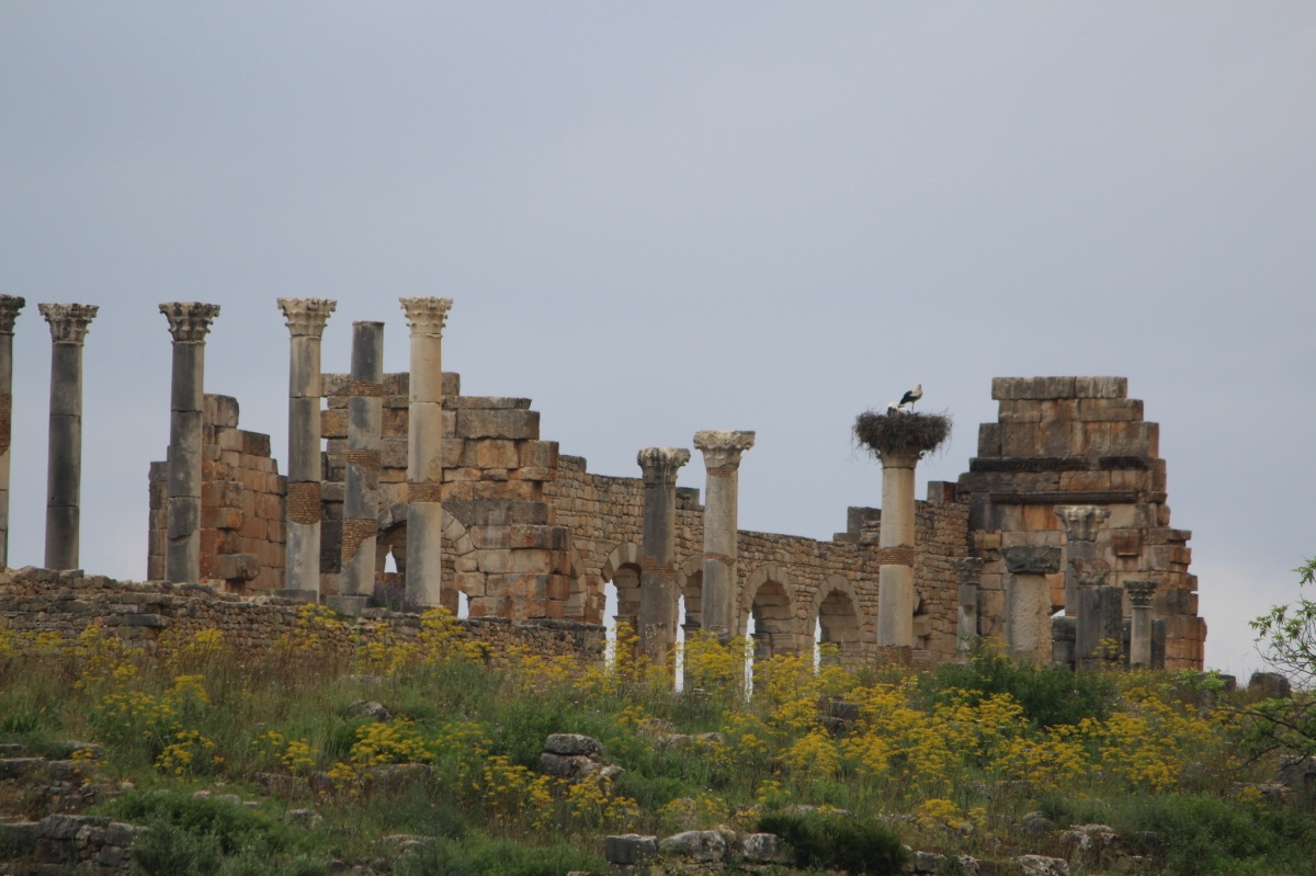 Staring at storks on summer's day in Volubilis, Morocco