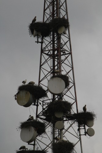 A tower of storks in Morocco